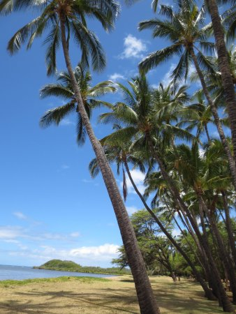 Kaunakakai, HI: Tropical scene