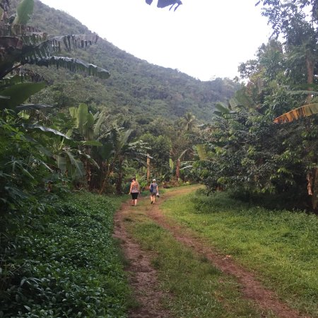 Afareaitu, Fransk Polynesien: coming down the 4x4 path, after leaving the marked trail (Aug 2016)