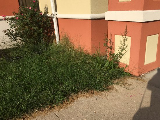 The weeds were so tall all around this property - it just looks disgusting.