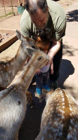 วิลเลียมส์, อาริโซน่า: Fun day feeding the deer.