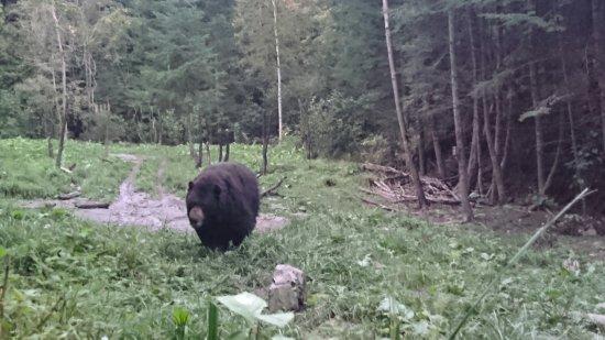 Saint-Jean-des-Piles, Canada: Super expérience d'observation d'ours aux berges St Maurice !! Guide super sympa, on apprend ple