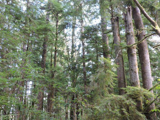 Warrenton, OR: Cathedral Tree Trail Hike - September 20, 2016
