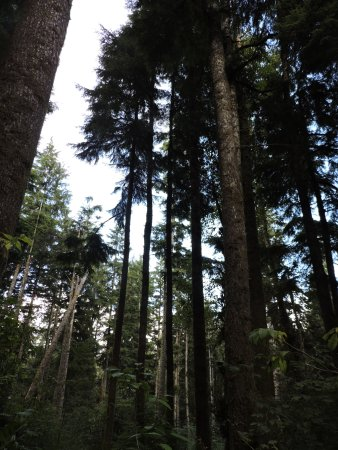 Warrenton, OR: Excursion - Cathedral Tree Trail Hike