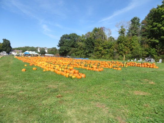 Cheshire, Μασαχουσέτη: Pumpkins
