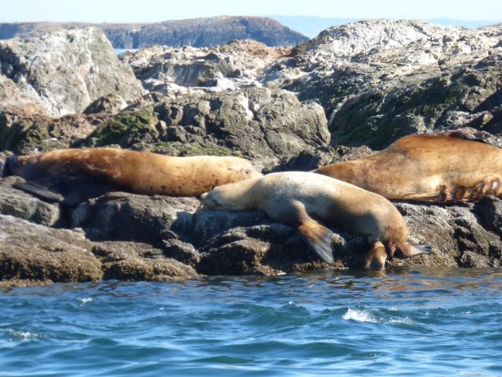 Port Townsend, Etat de Washington : Sea Lion