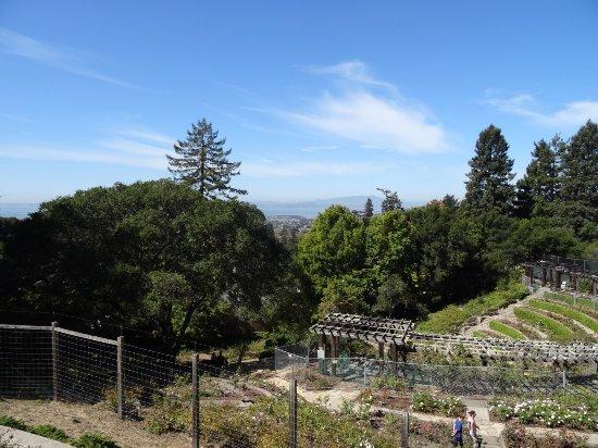 Berkeley, CA: photo1.jpg