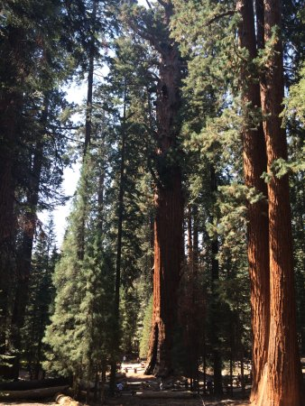 Three Rivers, Kalifornia: Giant Sequoas
