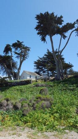 Los Osos, แคลิฟอร์เนีย: Cool cypress trees