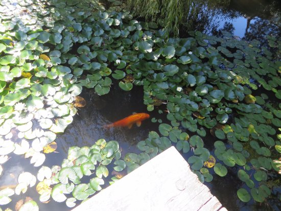 Picture of dr sun yat sen classical chinese for Chinese koi pond