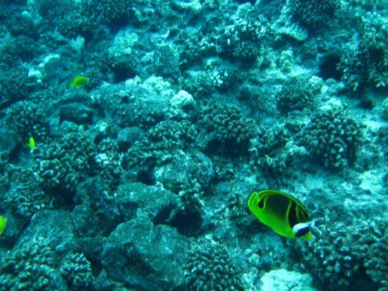 Maui Diamond II Sea Sports