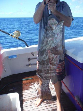 Bundaberg, Australien: cod