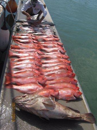 Bundaberg, Australië: the catch