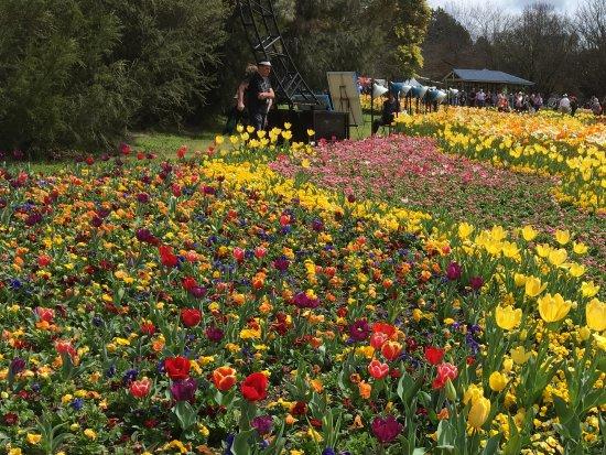 Floriade: Flowers!