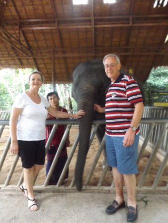 Chalong, Thailand: Meeting a young elephant