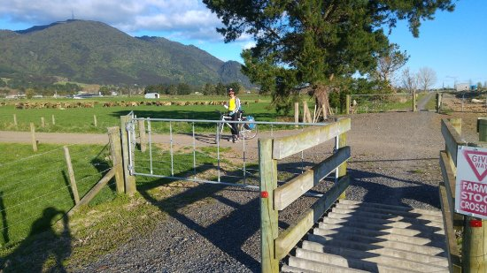 Thames, New Zealand: DAY2 nearly at Te Aroha - all those cattle stocks
