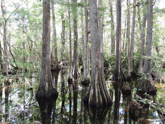 Port of the Islands Everglades - Adventure Resort: Everglades - Touring
