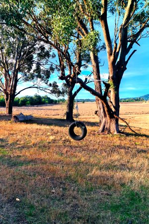 Broke, Αυστραλία: Tyre swing near the old school house