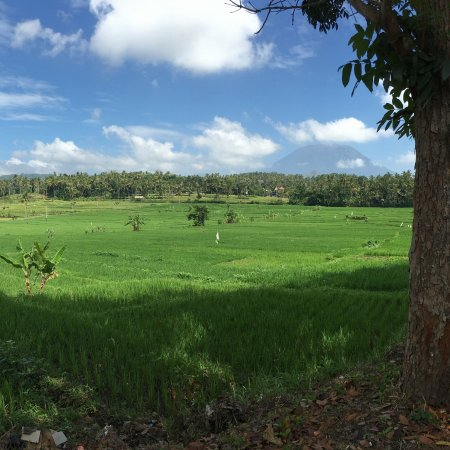 Bali Diving Academy: Scenery along the way.