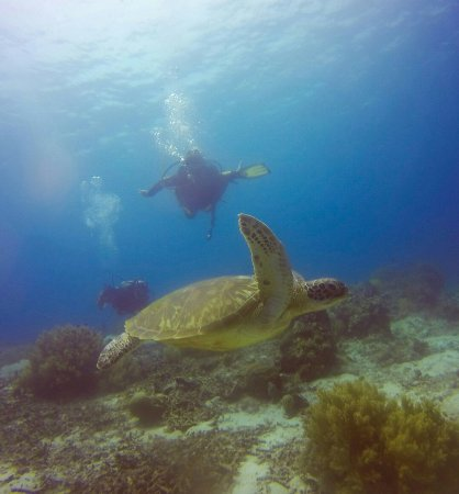 جزيرة بانقولا, الفلبين: Alona Divers