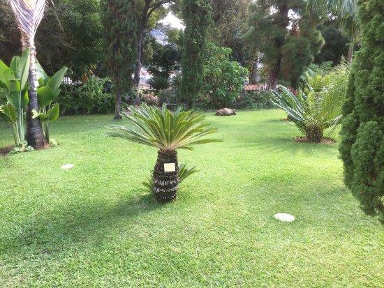 Quinta Jardins do Lago: Garten mit Schildkröte im Hintergrund