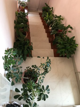 White Orchid Guesthouse.: The stairways to the upper floor