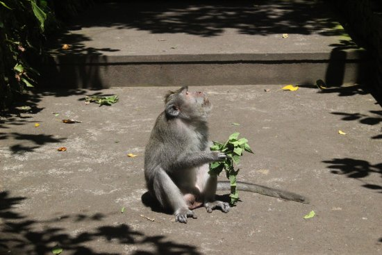 Agus Bali Private Tours: We loved these well-behaved monkeys!