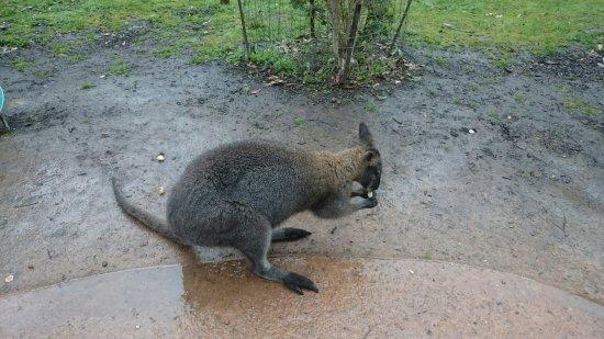 Healesville, Australien: DSC_0176_large.jpg