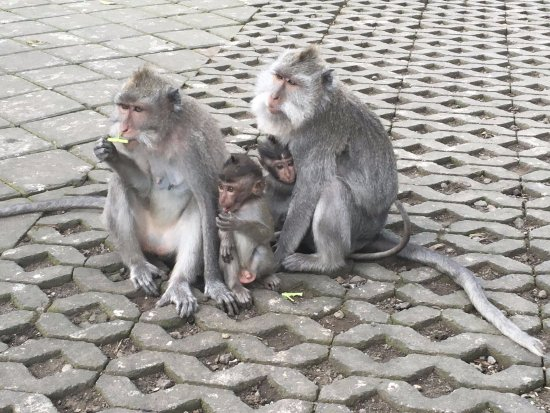 Agus Bali Private Tours: Well-behaved monkeys!
