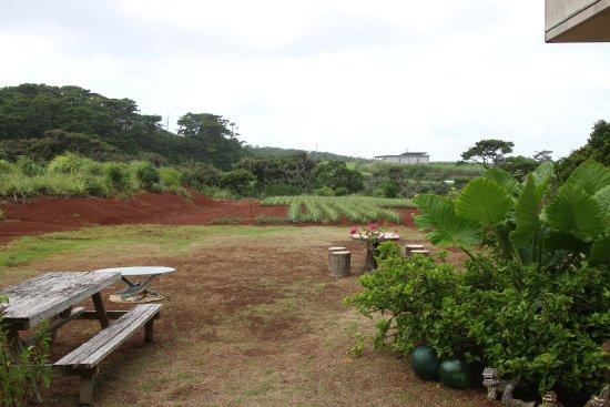 Kumejima-cho, Japan: カフェスペースの奥はそのまま個人農園?