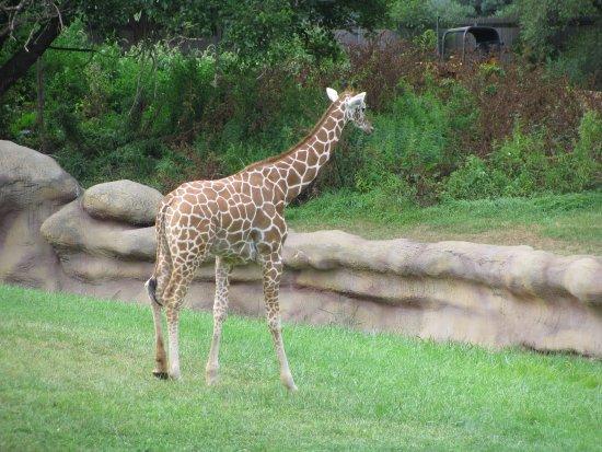 Royal Oak, MI: Detroit Zoo