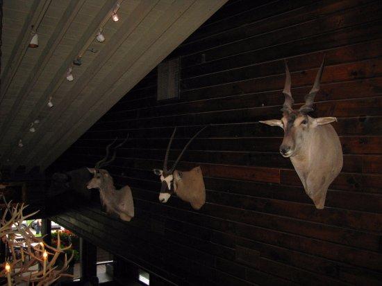 Troy, MI: Camp Ticonderoga
