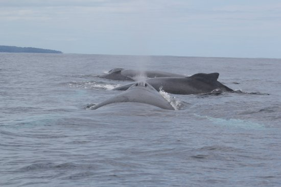 Drake Bay, Kostaryka: Whales just before Cana island