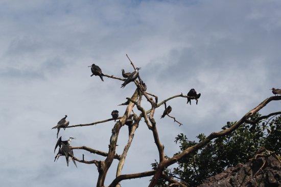 Drake Bay, Costa Rica: tree on an island on the way