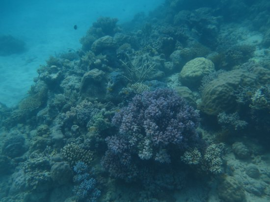 Reef Experience: My Pics on my 2nd dive