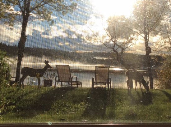 108 Mile Ranch, Canada : Regular visitors to the Arcona