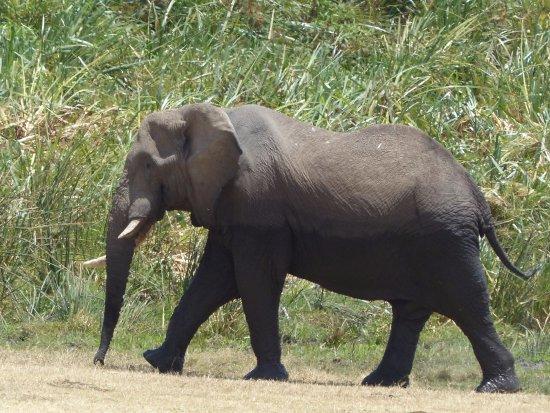 Ngurdoto Crater: Elephant