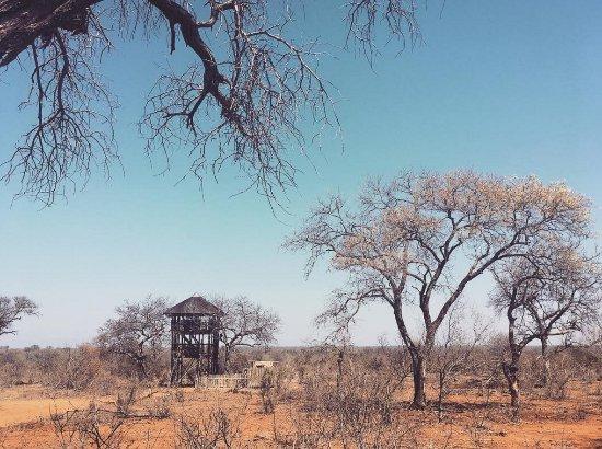Klaserie Private Game Reserve Foto