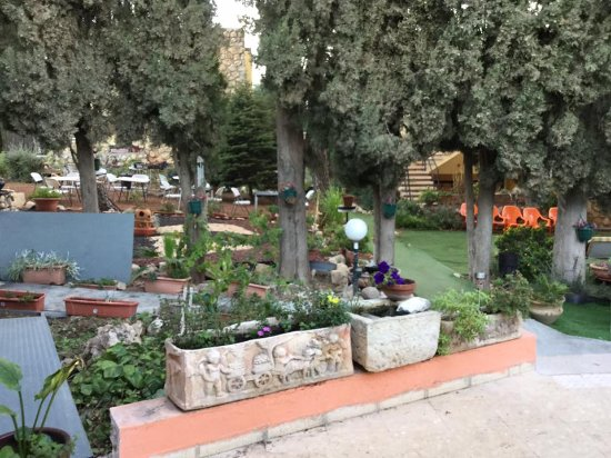 Safed Inn Picture