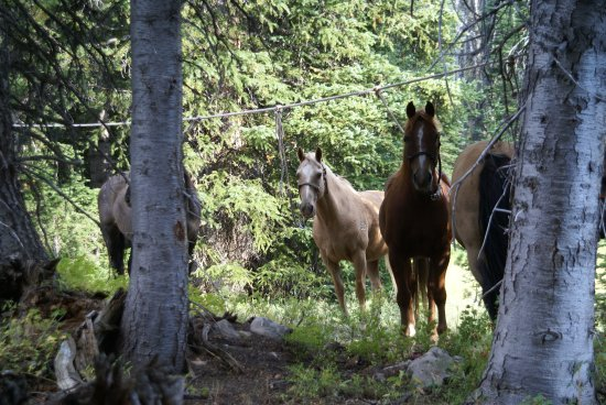 Pinedale, WY: Rawhide et Sunny