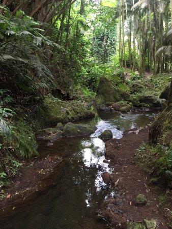 Papaikou, Hawái: Hawaii Tropical Botanical Garden