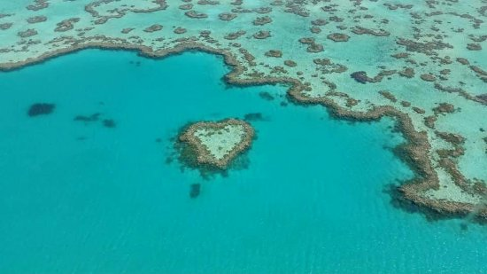 Heart Reef: FB_IMG_1474725845776_large.jpg