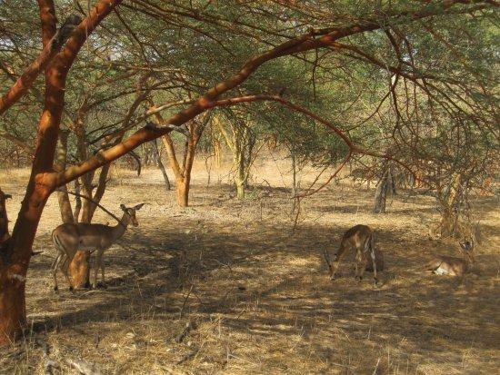La Petite Cote, Senegal: Reserva natural de Bandia