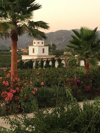 Valle de Guadalupe, México: photo1.jpg