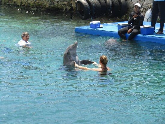 Dolphin Academy Curacao: photo1.jpg