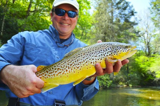Rosman, NC: Fall means.....BIG BROWNS!