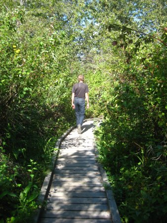 Williams Lake, Canada: Trail with boardwalk over marshy sections.