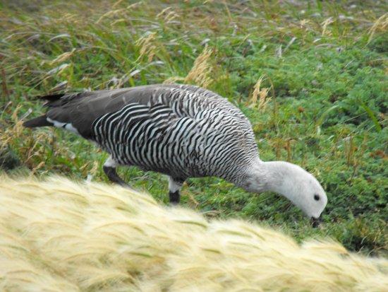 Seno Otoway Penguin Colony Photo