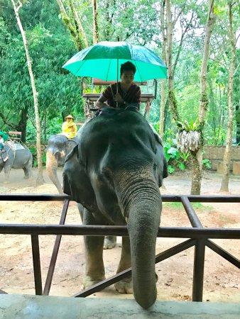 Chalong, Thailand: photo5.jpg