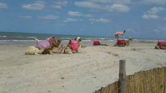 Holiday beach : image-0-02-01-2a345074b8a91efd9c0601bc18975b9321ec4ca87be15cd3e2a619797279145b-V_large.jpg
