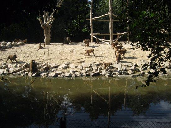 Le Refuge de l'Arche : les singes sur l'ile
